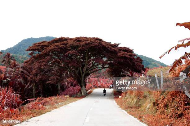 person riding motorcycle on road amidst trees against clear sky - davao city stock photos and pictures