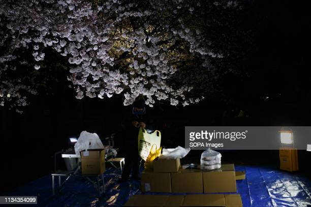 A person seen preparing for the cherry blossom views party at a park nagoya Aichi prefecture Japan The Cherry blossom also known as Sakura in Japan...