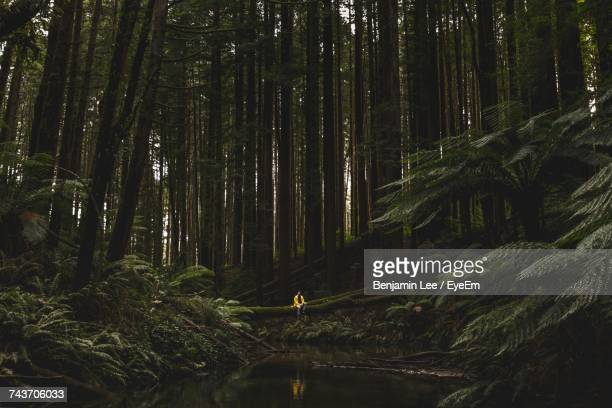person sitting in forest - victoria australia stock pictures, royalty-free photos & images