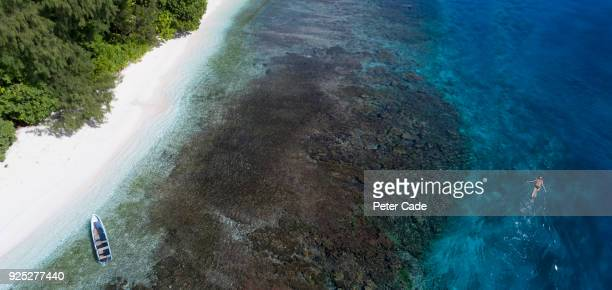 Person snorkeling off tropical beach