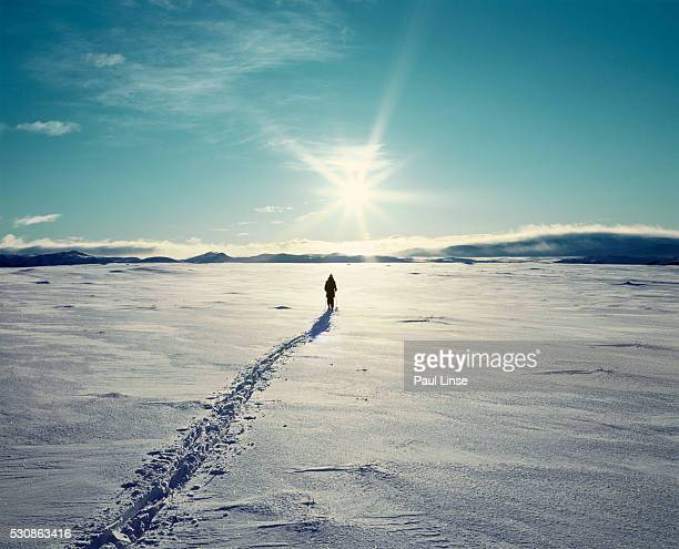 person snowshoeing across snowfield - snowfield stock pictures, royalty-free photos & images