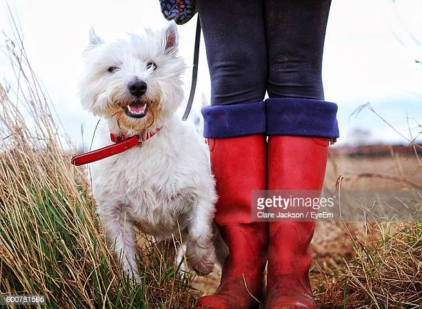 Person Standing By West Highland White Terrier On Field