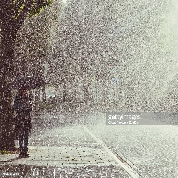 Person Standing Under Tree Holding Umbrella On Rainy Day