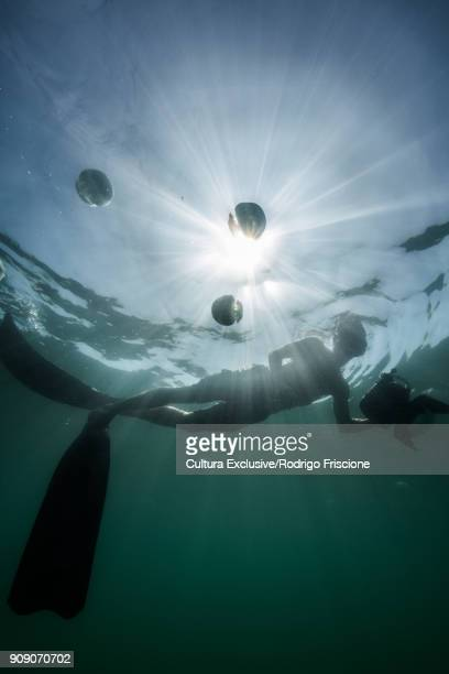 Person swimming alongside cannonball jellyfish (Stomolophus meleagris), La Paz, Baja California Sur, Mexico, North America