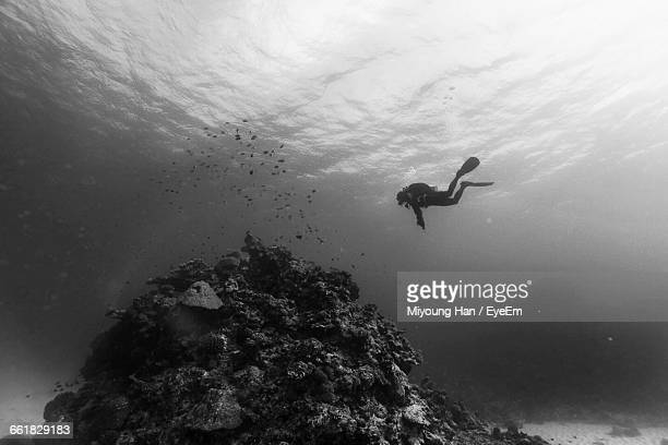 Person Swimming Underwater With School Of Fish