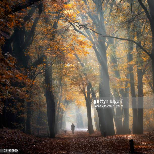 Person Walking Amidst Trees During Autumn