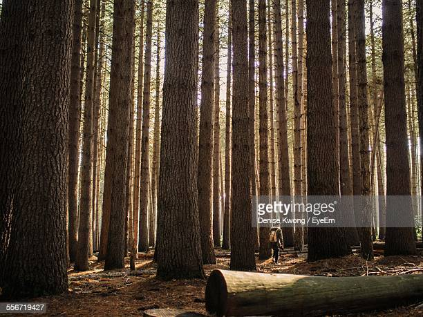 Person Walking Amongst Trees In Forest