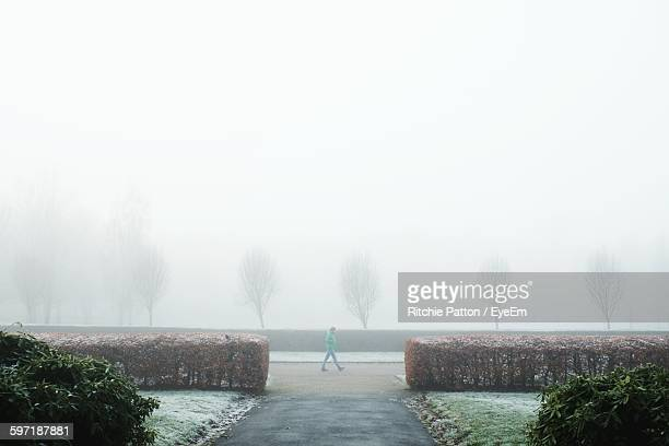 Person Walking In Park During Foggy Weather