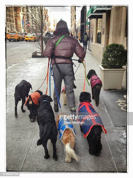Person walking several dogs on manhattan street