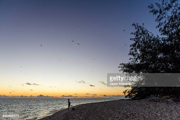 A person walks along the beach searching for Green Turtles before dawn.