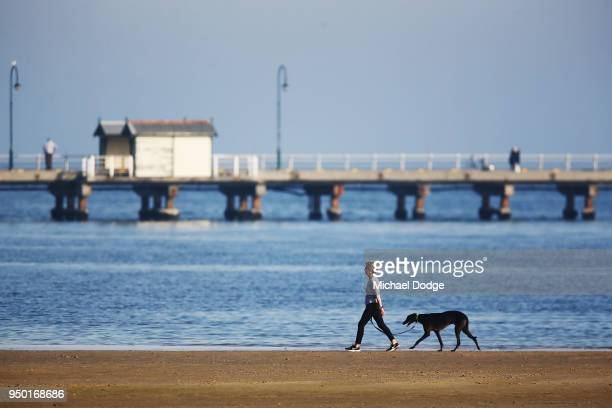 A person walks her dog along the StKilda foreshore on April 23 2018 in Melbourne Australia Melbourne has been experiencing unseasonably warm weather...
