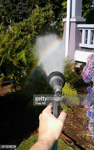 Person watering plant with hose