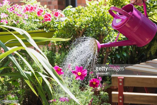 person watering plants and summer flowers on balcony - watering stock pictures, royalty-free photos & images