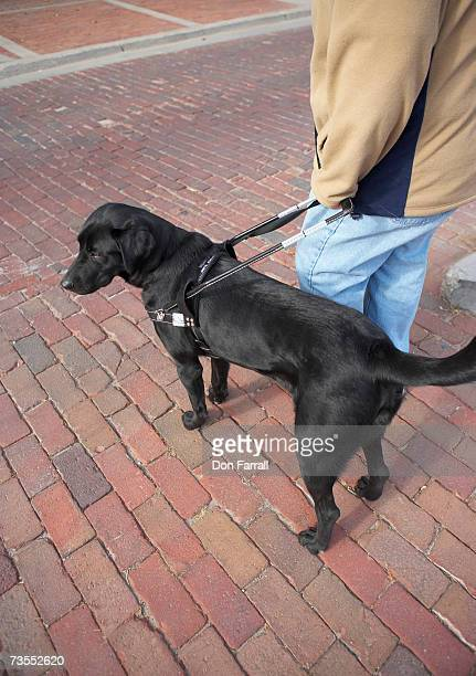 Person with black Labrador on street, low section