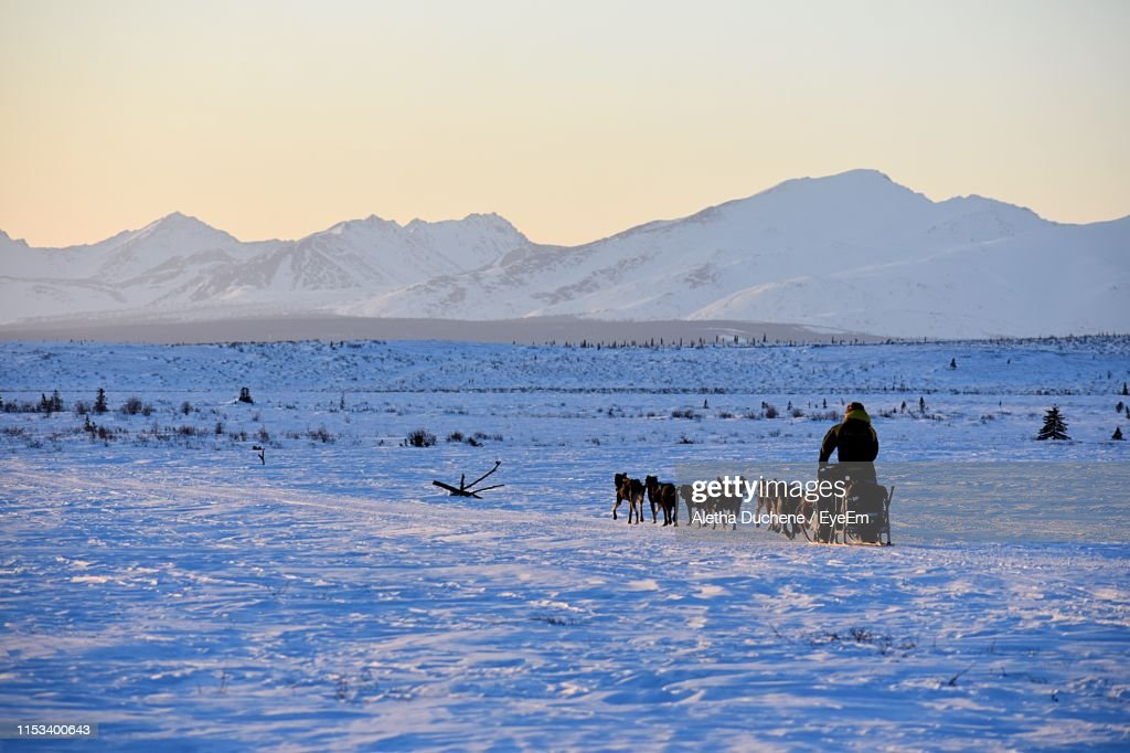 Person With Dogs On Snow Against Snowcapped Mountain : Stock Photo