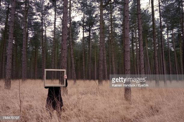 person with frame in forest - optical illusion stock photos and pictures
