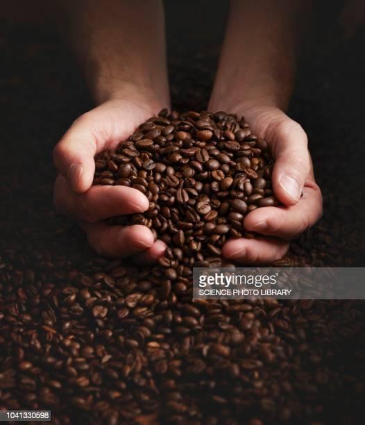 person with hands full of coffee beans - grain de café torréfié photos et images de collection