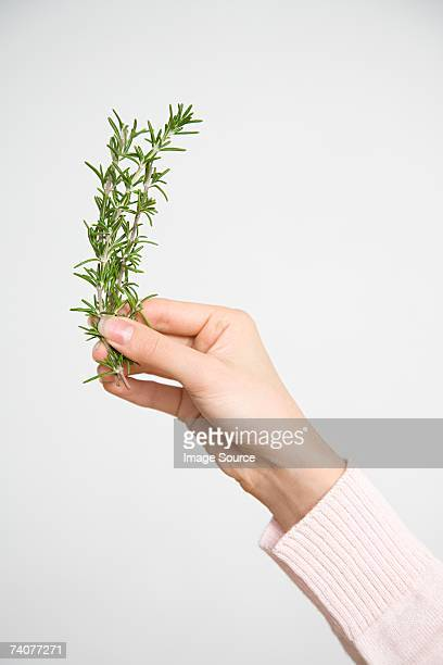 Person with sprig of rosemary