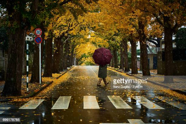 Person With Umbrella Crossing Wet Road Amidst Trees During Autumn