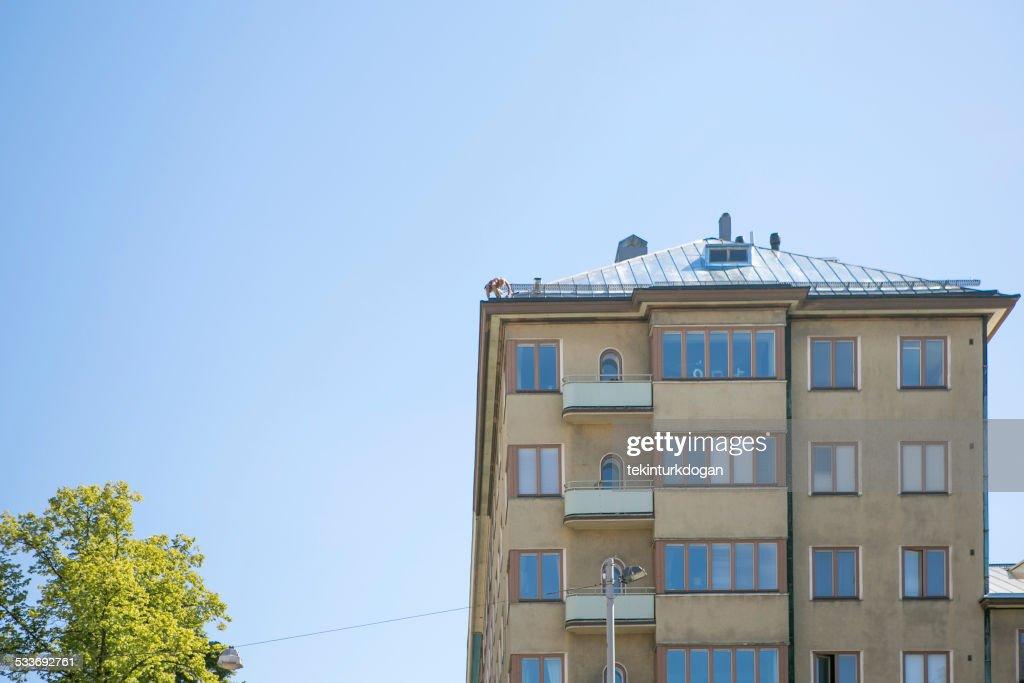 Persona che lavora sul tetto a helsinki, Finlandia : Foto stock