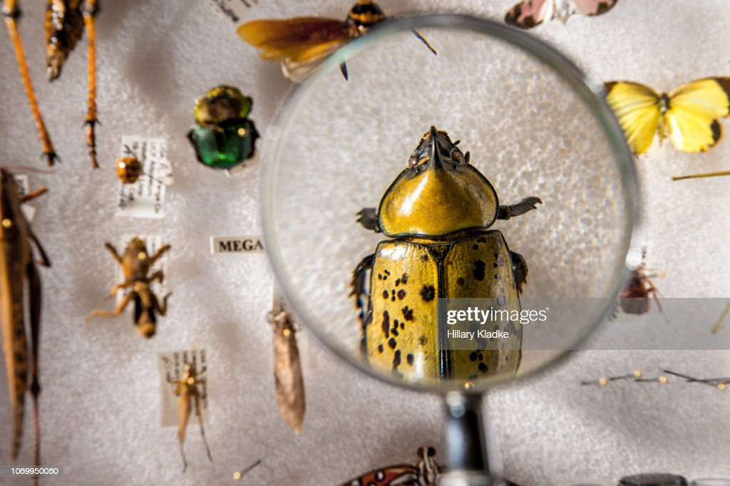 Personal bug collection with magnifying glass : Stock Photo