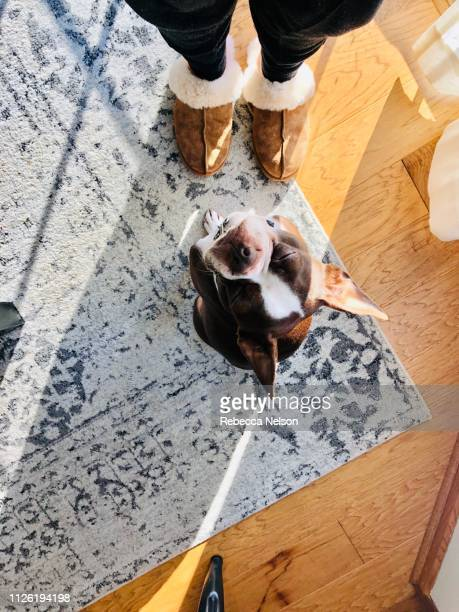 Personal perspective of dogs at the slippered feet of their owner