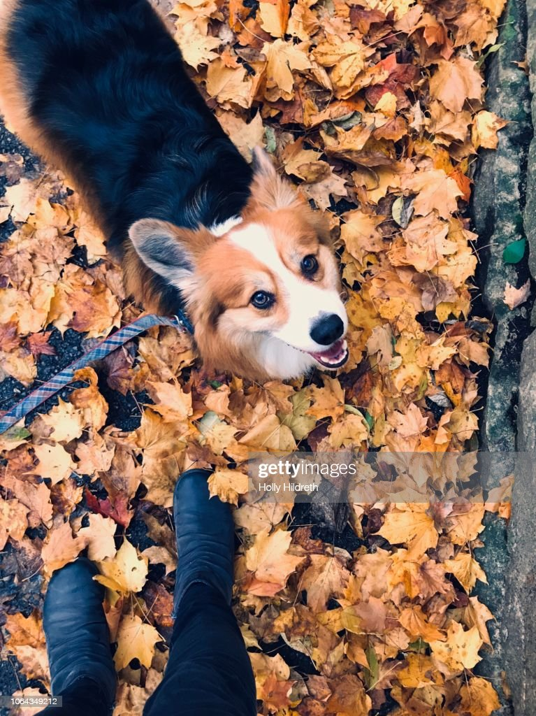 Personal Perspective of walking the dog in autumn : Stock Photo