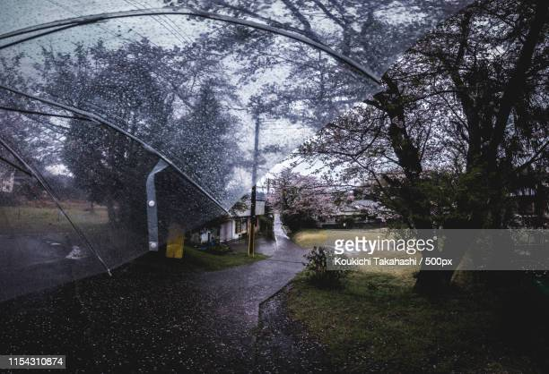 Personal perspective shot with umbrella and blossoming cherry tree in Japanese town