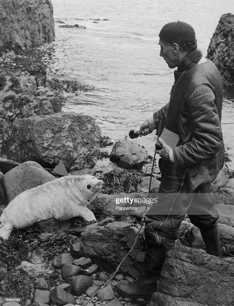 """Personalities. Nature. pic: November 1952. German born widlife recordist Ludwig Koch, with his apparatus, on the search for seal """"music"""" as he records a """"conversation"""". Ludwig Koch was famous for his recordings of wild birds and his broadcasts using """"soun : News Photo"""