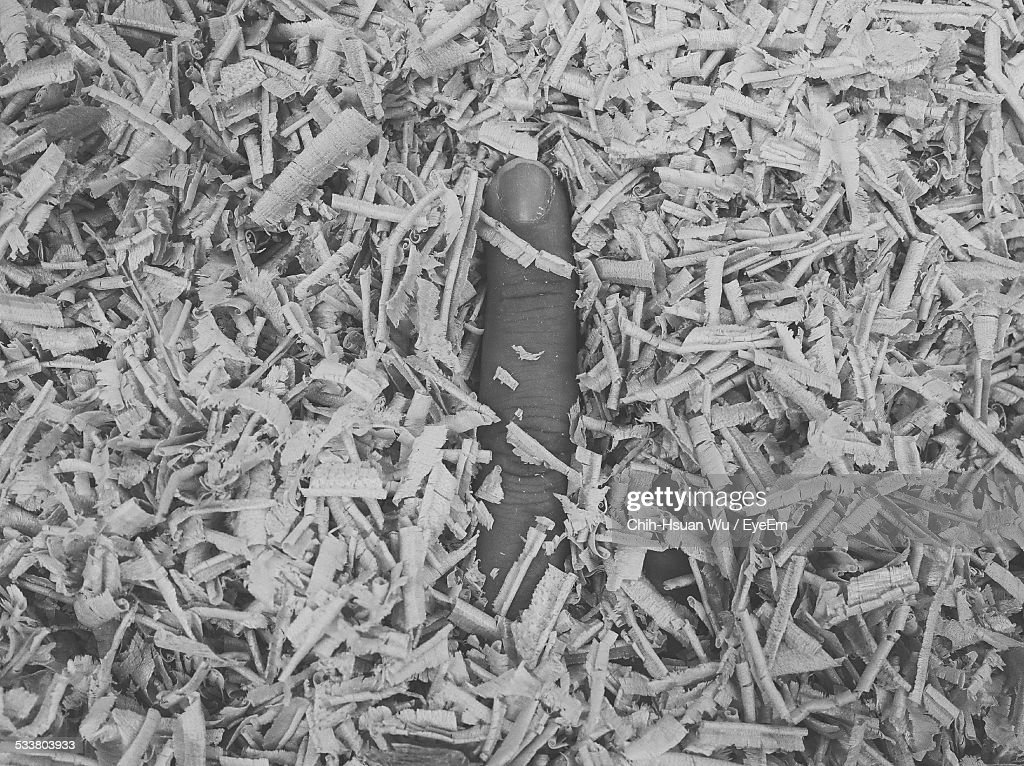 Persons Finger In Sawdust : Foto stock
