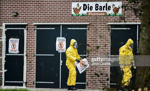 Persons in protective gear walk by the poultry farm where a new outbreak of bird flu was found today in Zoeterwoude on November 30 2014 The...