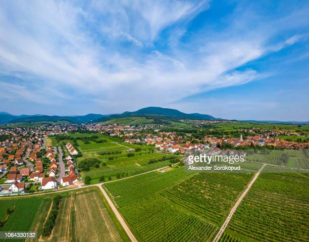 perspective aerial view from drone to fields and meadows of alsace - 青々とした ストックフォトと画像