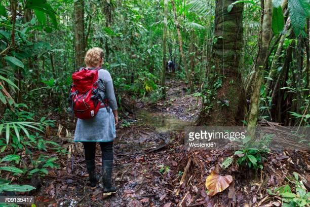 Peru, Amazon basin, Manu National Park, tourist hiking through rain forest