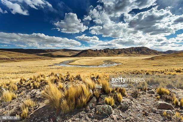 Peru, Arequipa, Altiplano, Pasto Grande