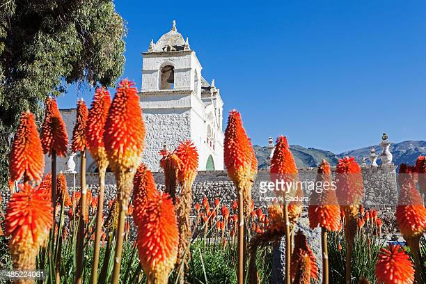 peru, maca, church in colca canyon - maca plant stock photos and pictures