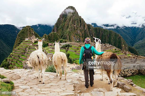 Peru, Machu Picchu region, Female traveler looking at Machu Picchu citadel and Huayna mountain with three llamas