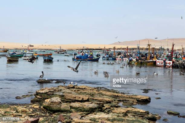 Peru Paracas National Reserve Fishermen and colorful barges lying at anchor in the small fishing port 15km away from Pisco Peruvian pelicans by the...