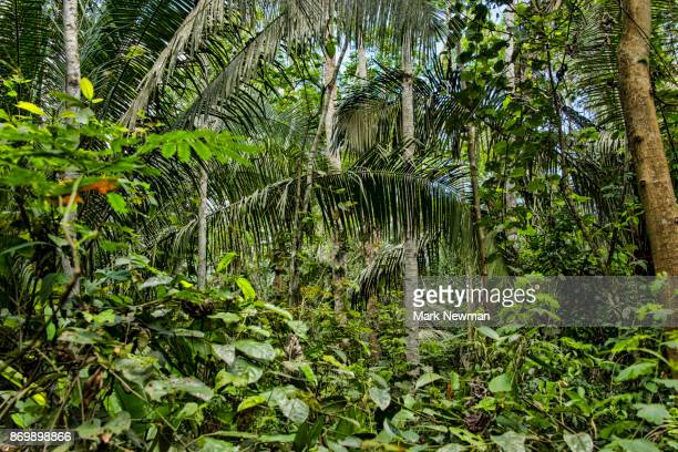 peruvian amazon jungle - peruvian amazon stock pictures, royalty-free photos & images