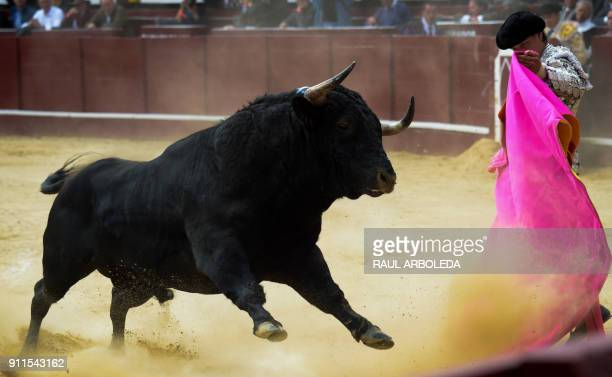 Peruvian bullfighter Andres Roca Rey performs during a bullfight at the La Santamaria bullring in Bogota Colombia on January 28 2018 PHOTO / Raul...
