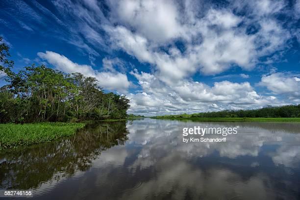 Peruvian jungle reflections