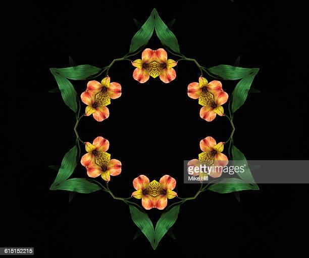 peruvian lily, alstroemeria, mandala - alstroemeria stock pictures, royalty-free photos & images