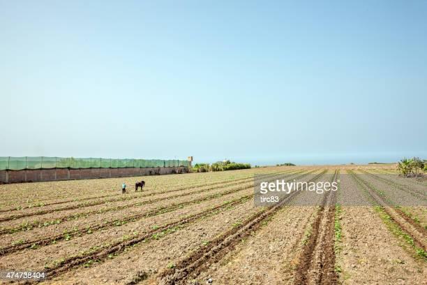 hombre peruano ocupándose de la tierra de los caballos-llamado plough - llanura costera fotografías e imágenes de stock