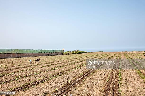 Homem Peruana a tratar da terra com Cavalo-extraídas plough