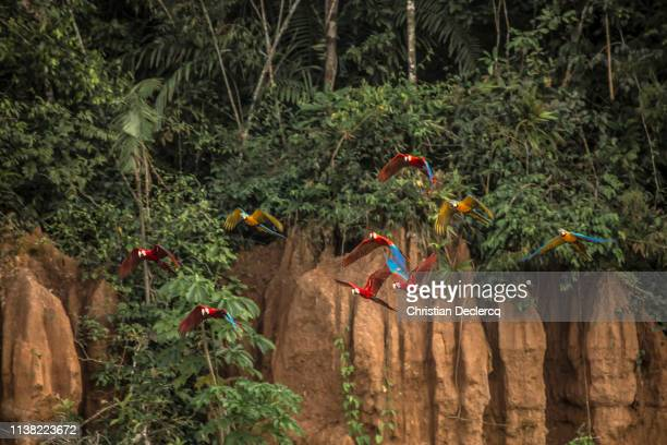 peruvian rainforest - madre de dios - peru - peruvian amazon stock pictures, royalty-free photos & images