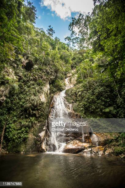 peruvian rainforest - peruvian amazon stock pictures, royalty-free photos & images