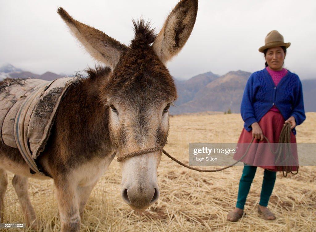 Peruvian Woman Standing with Donkey : Stock Photo