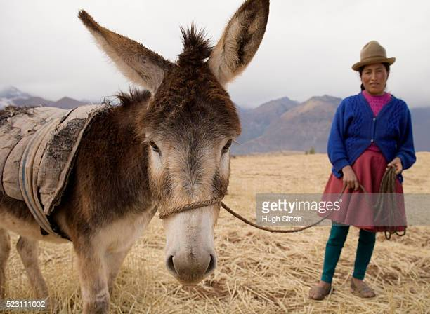 peruvian woman standing with donkey - hugh sitton stockfoto's en -beelden