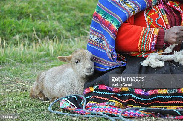 Peruvian woman with traditional clothing and sheep