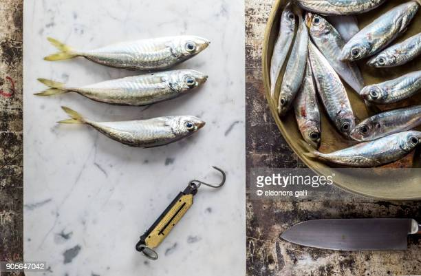 pesce azzurro - trachurus stock pictures, royalty-free photos & images