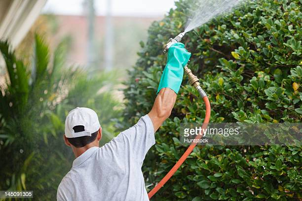 Pest control technician using high pressure spray gun with heavy duty gloves on shrubbery